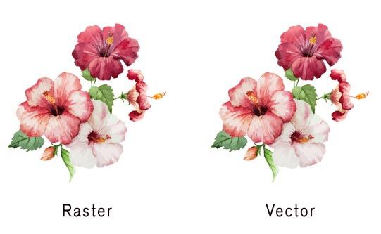 Perbedaan Gambar Raster Dan Gambar Vektor
